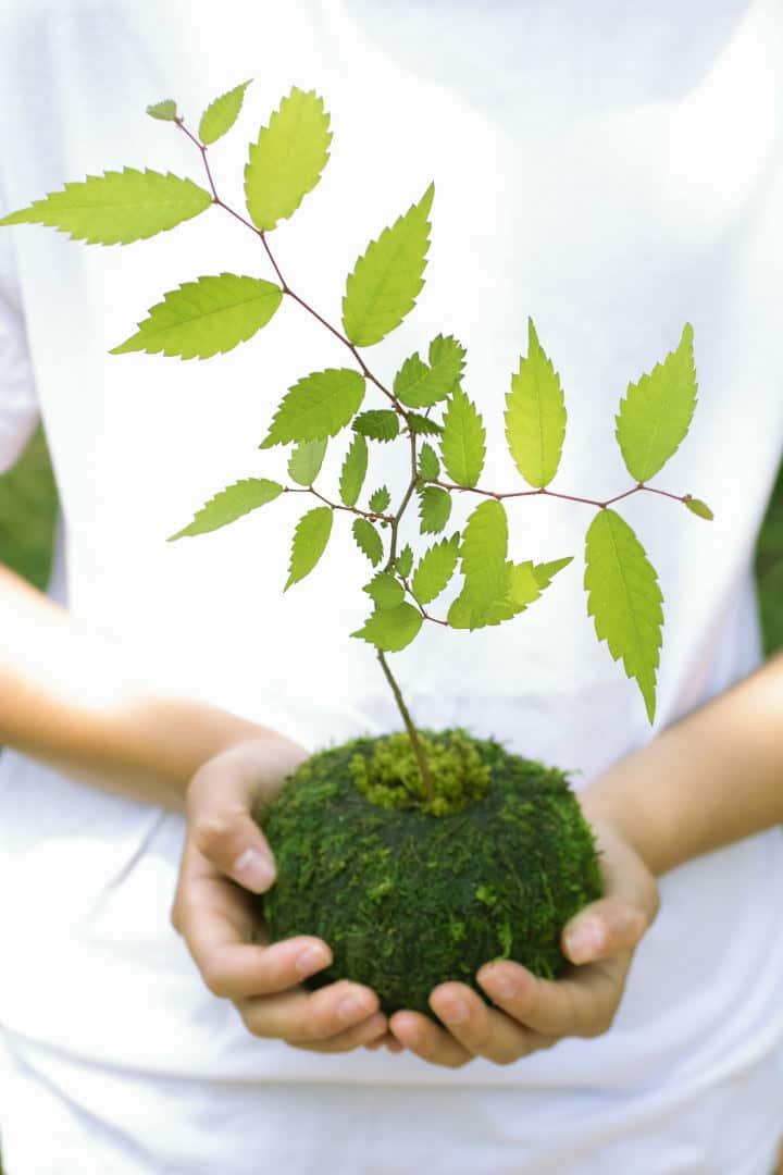 kokedama-budu-pasodinti-augalai